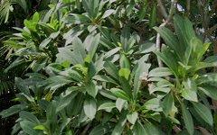 8 Woolwonga Court, Anula NT