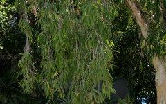 2/261 Weyba Road, Noosaville QLD