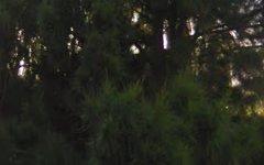 157 Wollombi Road, Farley NSW
