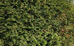 13 Greville Street, Beresfield NSW