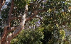 1/10 CROUDACE ROAD, Tingira Heights NSW