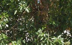 45A Elizabeth Crescent, Kingswood NSW