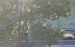 B2104/26 Cambridge Street, Epping NSW