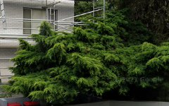 15/52 Meadow Crescent, Meadowbank NSW
