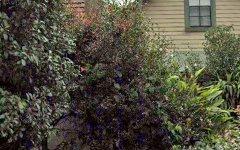 50 Holtermann Street, Crows Nest NSW
