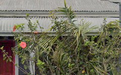 14 Callan Street, Rozelle NSW