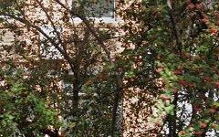 67/1-5 Cook Road, Centennial Park NSW