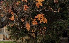 4/27 Seaview Street, Fullarton SA