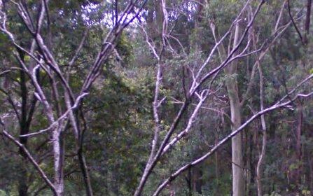 55 Black Bean Road, Wilsons Creek NSW