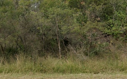 Lot 2410 Percher Street, Chisholm NSW 2322