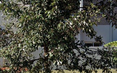 311/1 Sturt Pl, St Ives NSW 2075