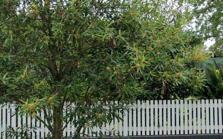 21 Park Avenue, Gordon NSW