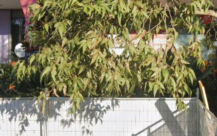 1701/46 Walker Street, Rhodes NSW