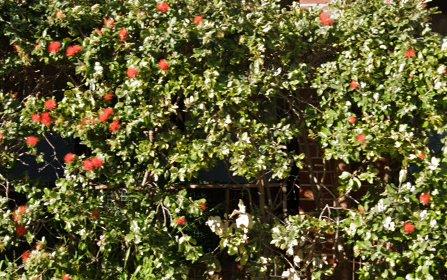 222/2 David St, Crows Nest NSW 2065