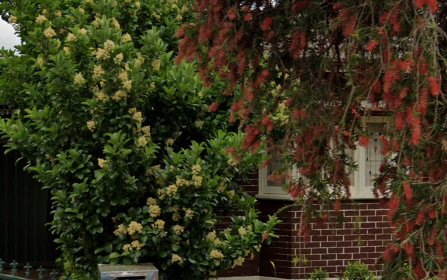 1 Ilfracombe Ave, Burwood NSW