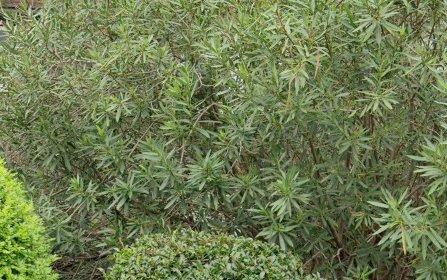 5/129 Victoria Rd, Bellevue Hill NSW 2023