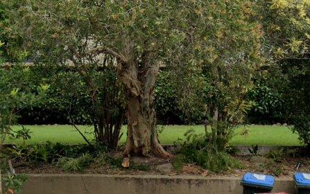 1B/39 Penkivil Street, Bondi NSW