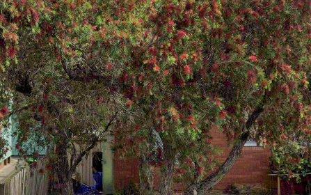 8/11 Ferguson Street, Wiley Park NSW
