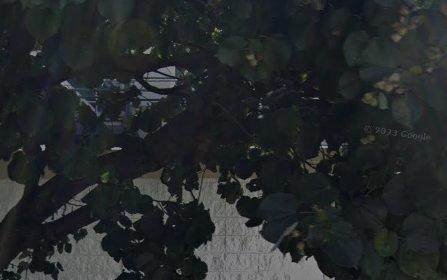 17/251 Oberon Street, Coogee NSW