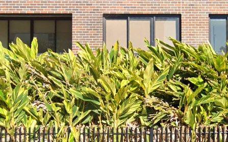 305/26 Harvey Street, Little Bay NSW