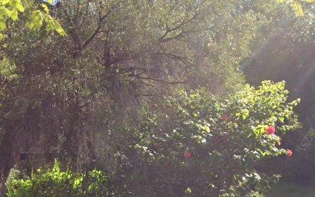 23A Constance Street, Westbourne Park SA