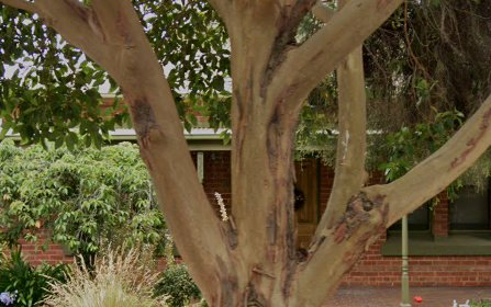 10 Richmond Avenue, Colonel Light Gardens SA 5041