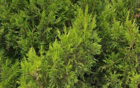 19 Kilburn Close, Dunlop ACT 2615