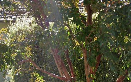 17 Albert Street, Queanbeyan NSW