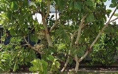 3 Malilma Court, Lyons NT