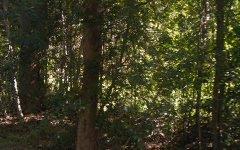 153 Settlement Road, Numinbah NSW