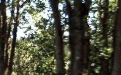 397A Tregeagle Rd, Tregeagle NSW
