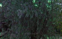 6 Hickory Crescent, Taree NSW