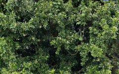 72 John Parade, Lemon Tree Passage NSW