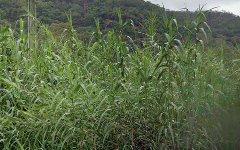 2321 Singleton Road, Colo NSW