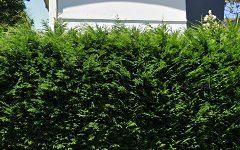 2/2 Frazer Street, Collaroy NSW
