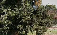 13 Summerfield Circuit, Cambridge Gardens NSW