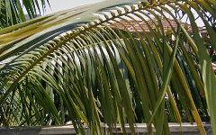 37 Countess Street, Mosman NSW