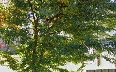 24 Smith Street, Cowra NSW