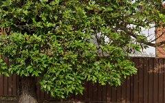 2 Cook Street, Lidcombe NSW