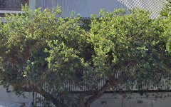 6 Gordon Street, Rozelle NSW