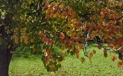 10A Riesling Cres, Wattle Park SA