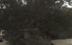 49 Keverstone Crescent, Isabella Plains ACT