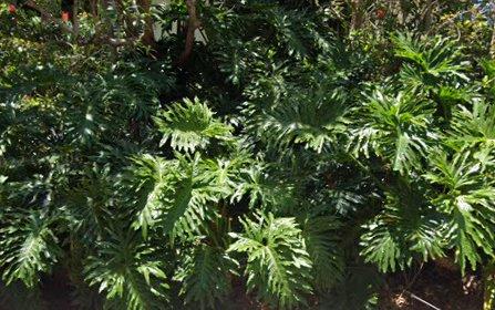 5/1 School Road, Korora NSW