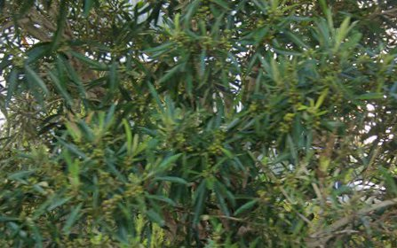 A307/6 Avenue Of Oceania, Newington NSW 2127