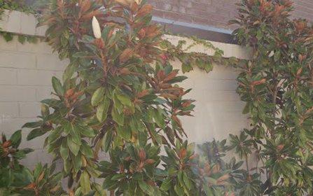61 Breillat Street, Annandale NSW 2038
