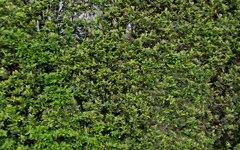 103/107 Chandos Street, Crows Nest NSW