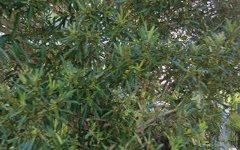 106/2 Avenue Of Oceania, Newington NSW