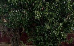 302 Norton Street, Leichhardt NSW