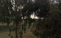 1998 Zanotto Road, Nericon NSW