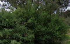 55 Dowling Drive, Murringo NSW